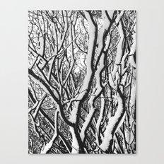 sleepy trees Canvas Print