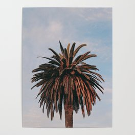Solo Palm Tree | Venice Beach, California Poster