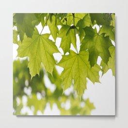 The Green Leaves of Summer Metal Print