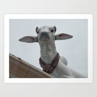 Cows on the roof   Art Print