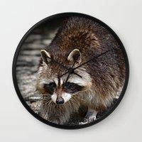 racoon Wall Clocks featuring Racoon by MehrFarbeimLeben