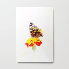 Red admiral and marigold Metal Print