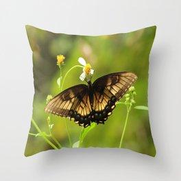 Butterfly - Everglades Throw Pillow