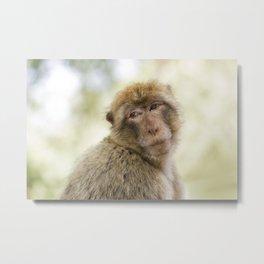 Monkey around Metal Print