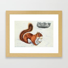 Fuertes, Louis Agassiz (1874-1927) - Burgess Animal Book for Children 1920 (Red Squirrel 2) Framed Art Print