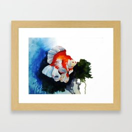 Ryukin Goldfish Framed Art Print