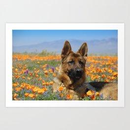 German Shepherd - Flower Boy Art Print