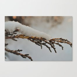 Winter's Abrasive Touch Canvas Print