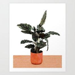 Calathea Planter Art Print