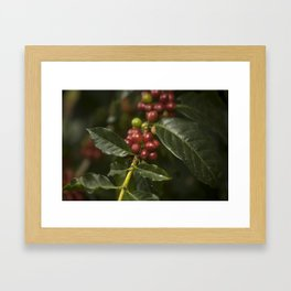 Coffee Seeds Framed Art Print