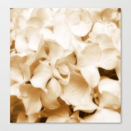 Nostalgic Hydrangea Floral Canvas Print