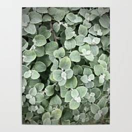 silver leaves Poster