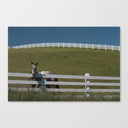 Horse in the Palouse Canvas Print