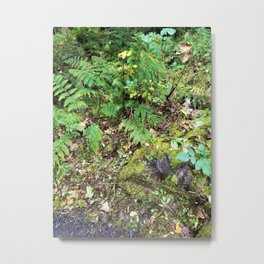 Ferns and Moss Metal Print