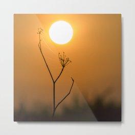 Nature sunset Metal Print