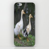 ducks iPhone & iPod Skins featuring Ducks by Stephanie Owens