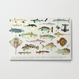 Illustrated Colorful Southern Pacific Ocean Exotic Game Fish Identification Chart No. 3 Metal Print
