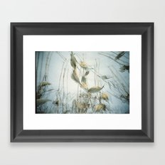 Milk Weed Framed Art Print