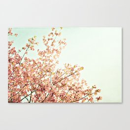 Peach Spring Dogwood Tree Photography, Coral Salmon Mint Aqua Teal Turquoise, Spring Floral Branches Canvas Print