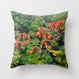 Destined to Become Throw Pillow