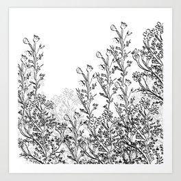 Chamomile Garden Art Print