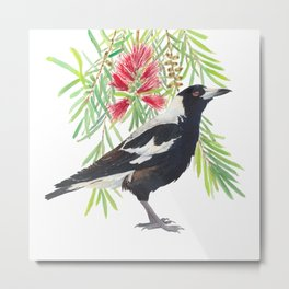 Australian Magpie and bottlebrush tree brach with red flowers watercolour painting Metal Print