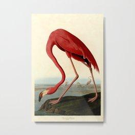 Flamingo, Flamingo Art Print, Flamingo Print, Animal Decor, Illustration, Natural History, Flamingo Poster, Bird Species, Flamingo Prints, Classroom, Science Art, Nautical, Audubon, Birds, Fun, Biology, Nature, Animal, Feathers, Flamingo Art Metal Print