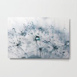 dandelion blue Metal Print