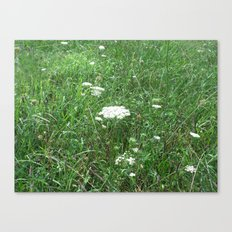 Queen Anne's Lace/field Canvas Print
