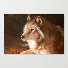 Wolf Beauty Canvas Print