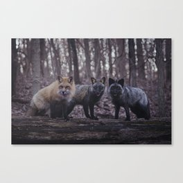 Red Fox (Vulpes vulpes) Color Phases Canvas Print