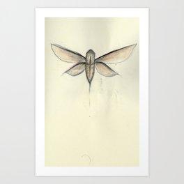 Moth [[ 2 ]] Art Print