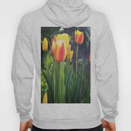 Spring Tulips in Bloom Hoody