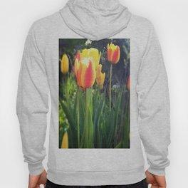 Spring Tulips in Bloom Hoody