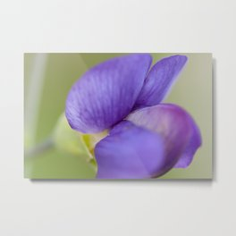Taking Flight - Purple Lupin, New Zealand Metal Print
