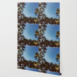 Palm Tree Photography Wallpaper