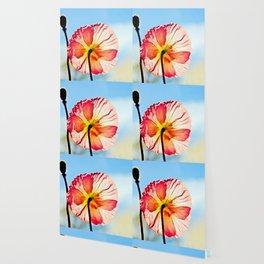 Poppy in Backlight I Wallpaper