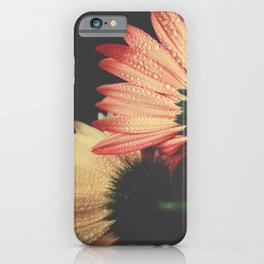 flowers III - Gerbera Daisies iPhone Case