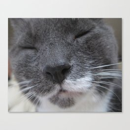 Cutest Kitty-cat ever! Canvas Print