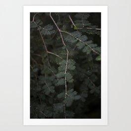Plant - Fern 3 Art Print
