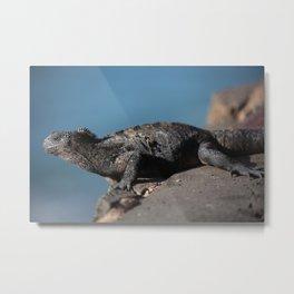 Galapagos Iguana Metal Print