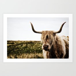 Highland Cow - color Art Print