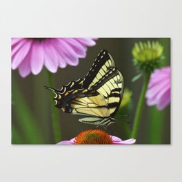 Tiger Swallowtail Butterfly #2 Canvas Print