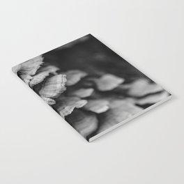 Cascading Fungus Notebook
