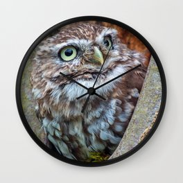 close up owl in the hole Wall Clock