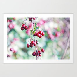 Autumn Dream Berrys Art Print
