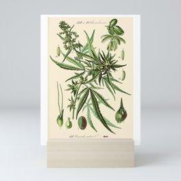 Cannabis Sativa - Vintage botanical illustration Mini Art Print