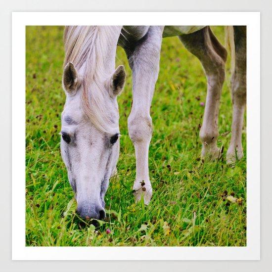White horse on green meadow Art Print