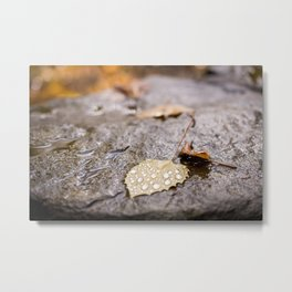 Scenes of Fall Metal Print