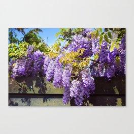Wisteria Garden Canvas Print